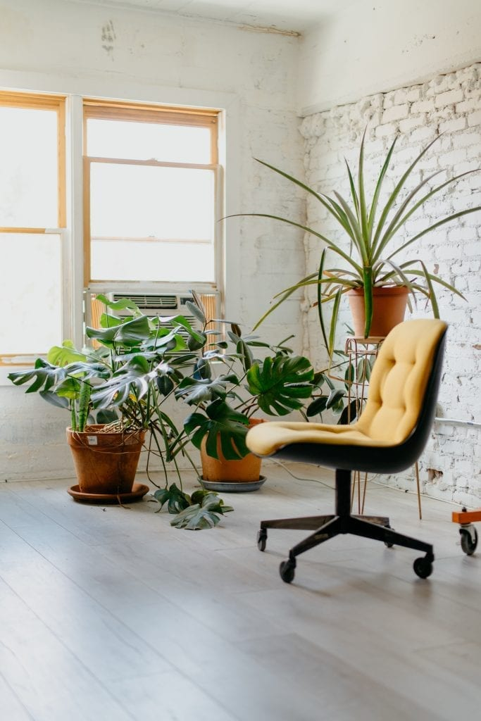 zidle-rostlina-okno-podlaha
