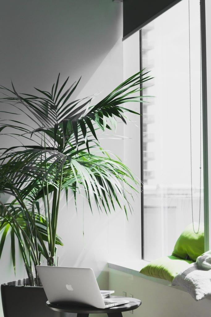 rostlina-okno-kulaty-stul-zed-svetlo-notebook