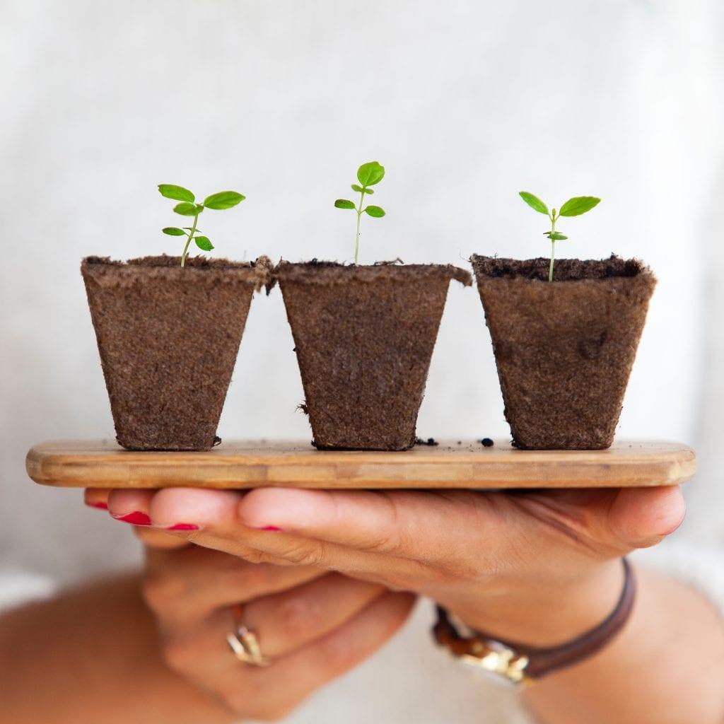 Ruce-drevena-podlozka-zemina-rostlinky