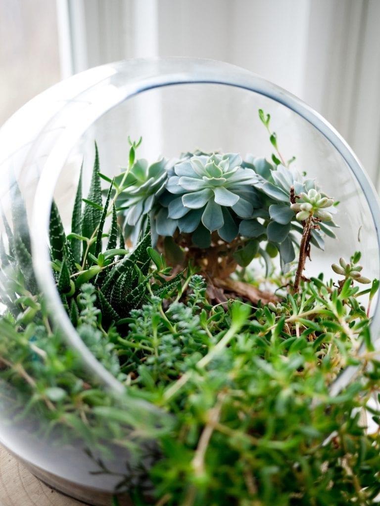 Sklenena-nadoba-rostliny-svetlo